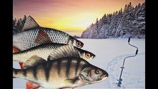 Какая рыба лучше всего клюет в январе