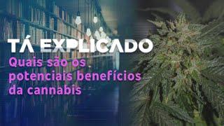 Cannabis: saiba quais são os potenciais benefícios e o que é permitido no Brasil | Tá Explicado