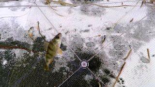 Снасти для ловли живца как его ловить