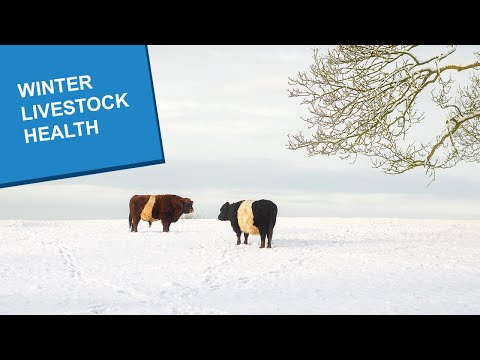 , title : 'Winter Livestock Health