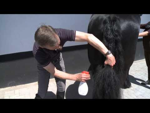 leovet Pflege-Tipp: Striegeln