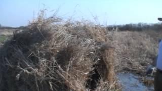 Смотреть онлайн Опыт охоты на гуся, маскируемся в водоеме