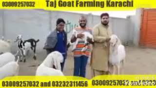TAj goat farm - Ən Populyar Videolar