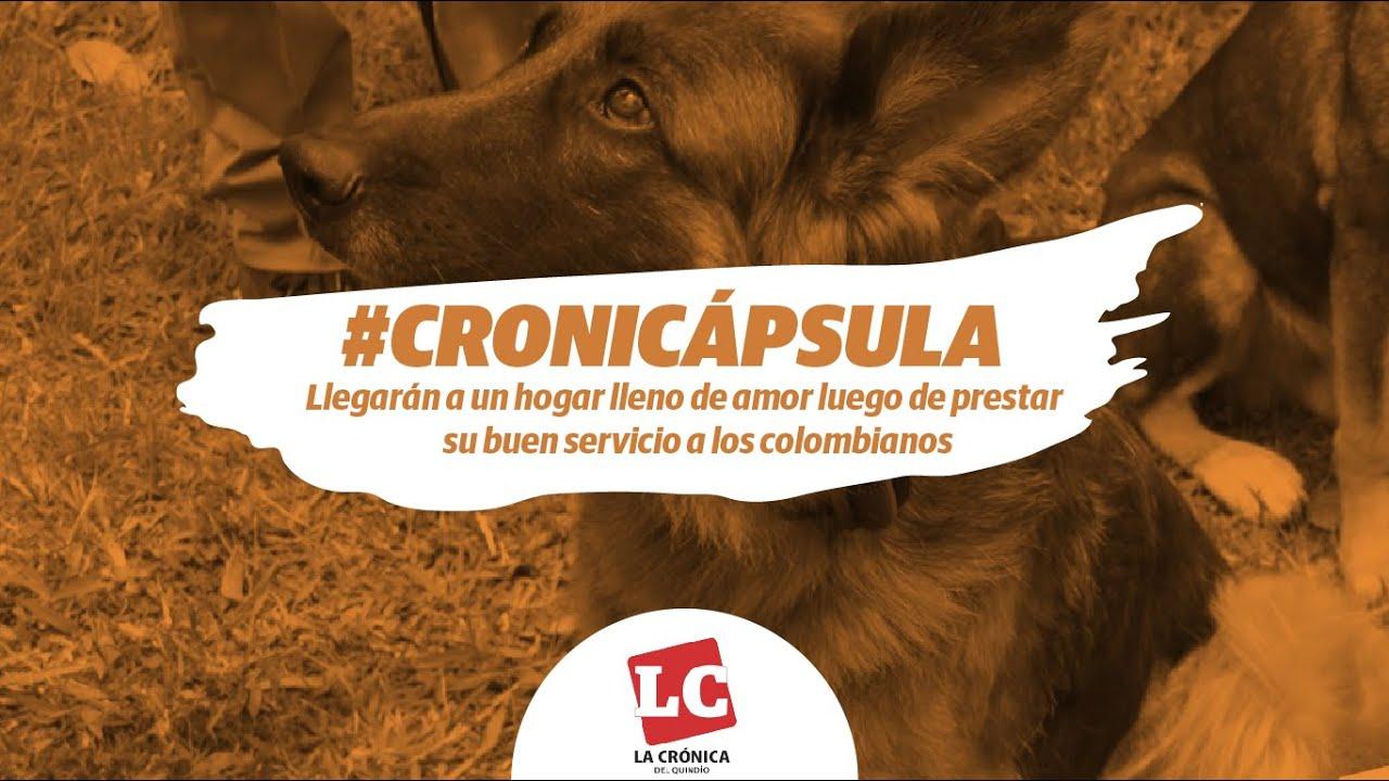 #Cronicápsula   Llegarán a un hogar lleno de amor luego de prestar su buen servicio a los colombianos