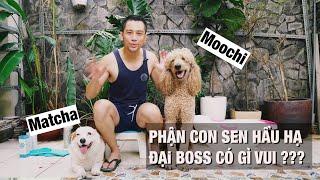 Sen tắm cho boss   Nuôi và chăm sóc 2 chú chó lớn có khó không ?