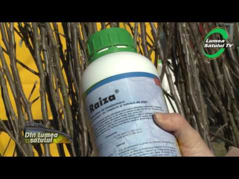 Suc detoxifiere blender