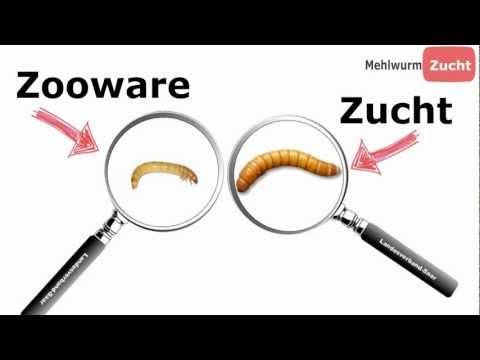Für die Würmer charakteristisch