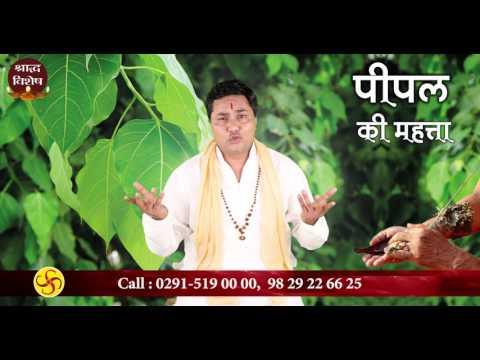 श्राद्ध पक्ष में पीपल सींचना (Pitra dosh)Shradh 2018Pt. Suresh Shrimali