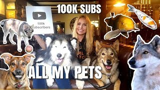 ALL MY PETS IN ONE VIDEO - 100K SILVER PLAY BUTTON AWARD UNWRAPPING