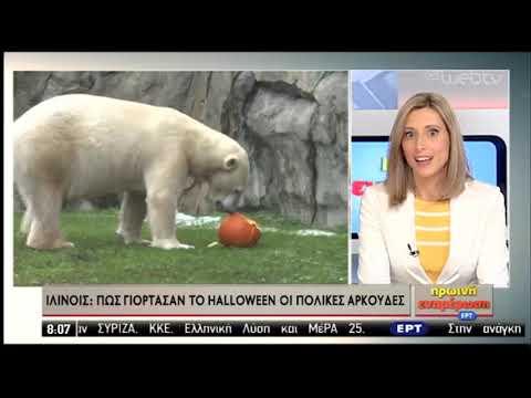 Πώς γιόρτασαν το Halloween οι πολικές αρκούδες | 01/11/2019 | ΕΡΤ