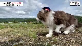Vol.112「にゃん旅鉄道」田んぼをお散歩するにゃ~