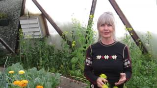 Winter Gardening Safe Haven