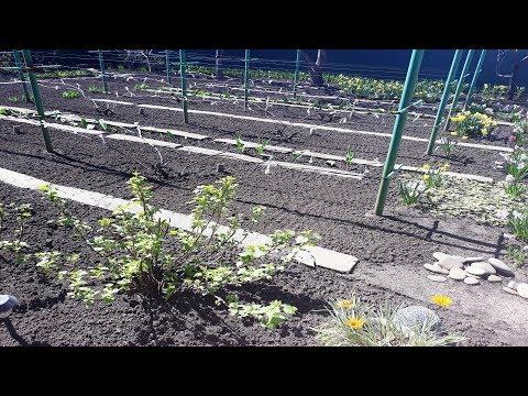 Первые весенние работы в саду, что уже сделано  Обзор сада