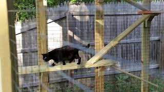 The Costco Yardistry Pavilion Cat Enclosure