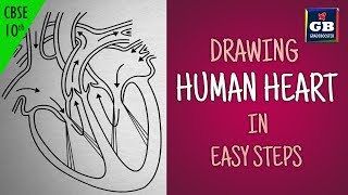 Easy way to draw human #heart :Life processes   NCERT class 10   biology   science  CBSE syllabus