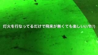 灯火採集栃木県北2017年7月14日