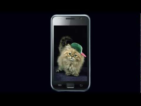 Video of Ginger Cat Cute Wallpaper