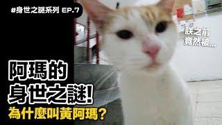 【阿瑪的身世之謎!為什麼叫黃阿瑪?】志銘與狸貓
