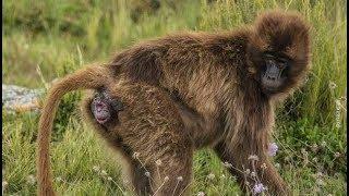 الولادة عند الحيوانات .. سبحان الذي خلق فعلّم و أبدع  BIRTH OF ANIMALS