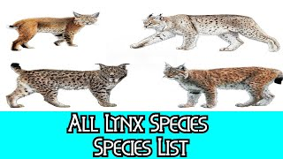 All Lynx Species - Species List