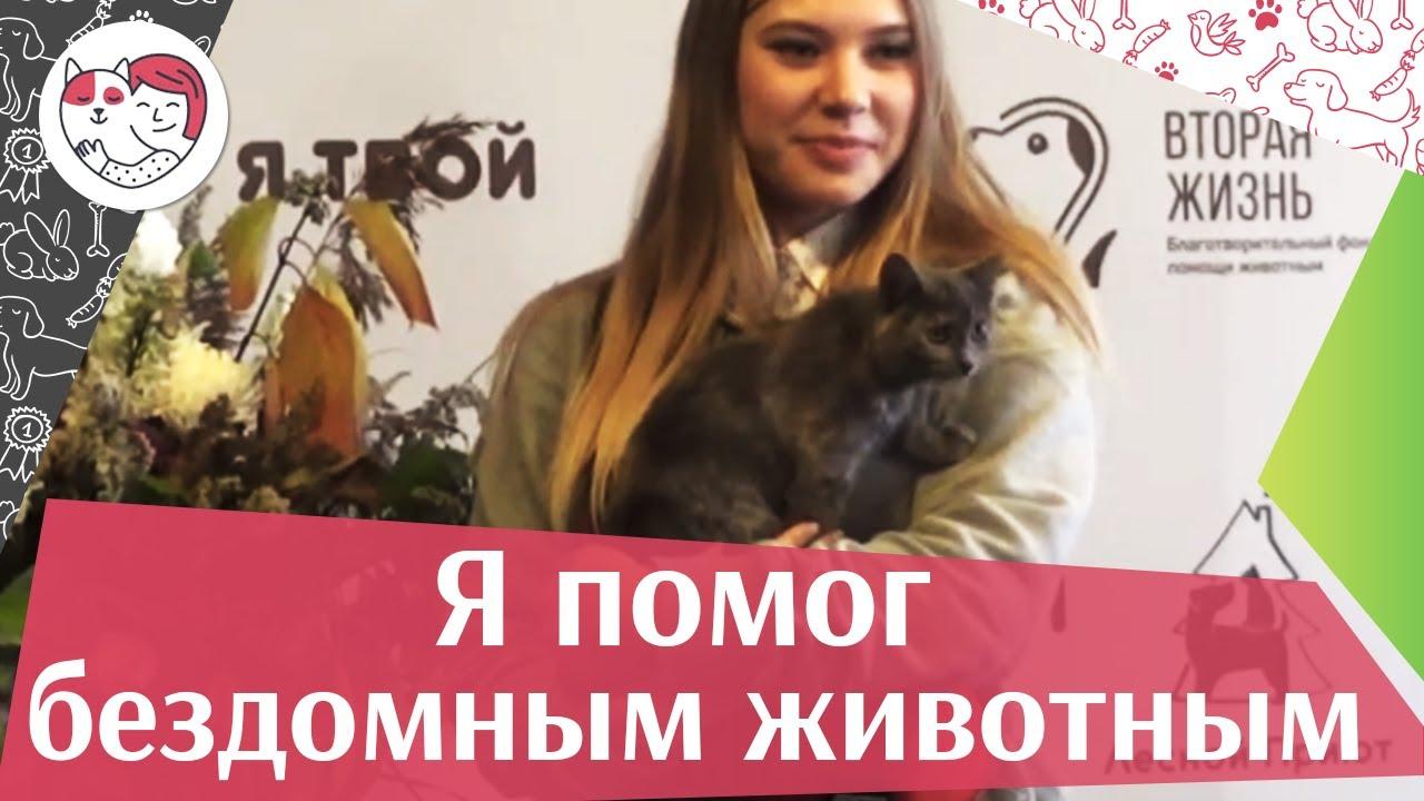 Выставка-раздача животных из приютов «Я твой» на ilikepet