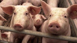 Planet Wissen - Vegetarisch leben, weit mehr als nur Fleischverzicht