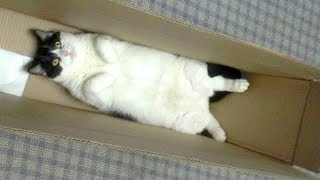 Download Youtube: Warning: You will get STOMACH ACHE FROM LAUGHING SO HARD - Funny CAT compilation