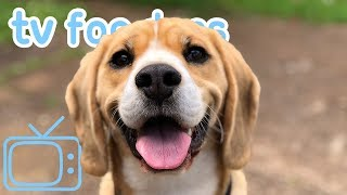 TV for Dogs! Videos to Chill Your Anxious or Bored Dog! + Calming ASMR Music!