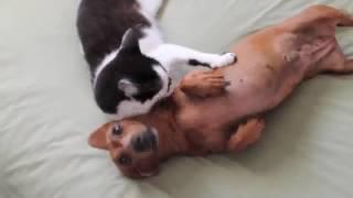 """Dog and activity / Hund und Aktivität / Собака и активность """"Massive Green"""""""