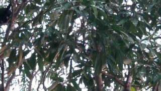 preview picture of video 'Parque de Convivencia Jonuta Tabasco 1.AVI'
