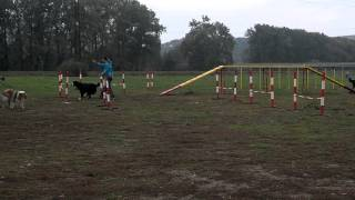 preview picture of video 'Cvičení agility - Napajedla'