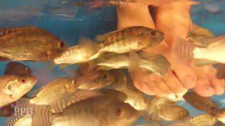 Cambodia - Siem Reap - Kids react - First time having fish massage