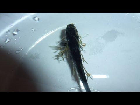 Alisan ng katawan ng parasites