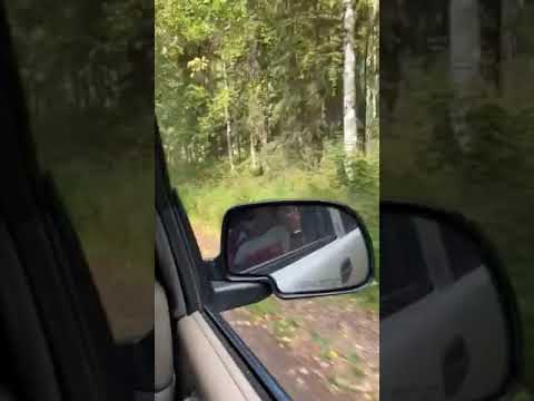 Video Of Rosehip Campground, AK