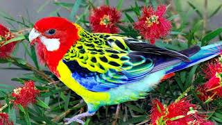 Colorful Birds (HD1080p)