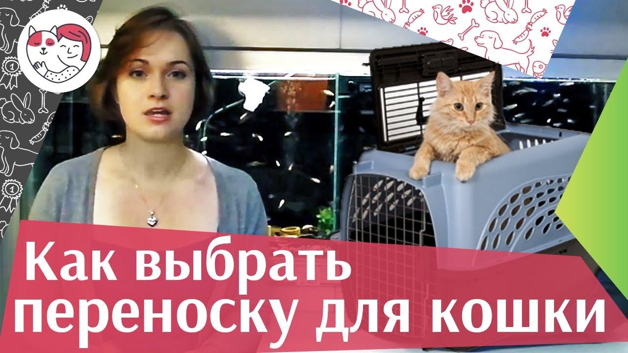 Как выбрать переноску для кошки на ilikepet
