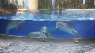 Видео с забавной реакцией любопытных дельфинов на белок покорило Сеть