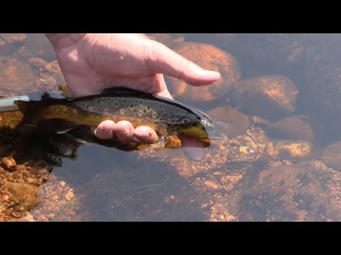 Fly Fishing Small Moorland Streams for Wild Brown Trout - The East Dart (How to fish small streams)
