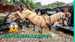 🐎 KUDA DELMAN TV 🔴 Kuda Delman Jingkrak Jingkrak || Lihat Keseruhan Pak Kusir Memasang Kereta