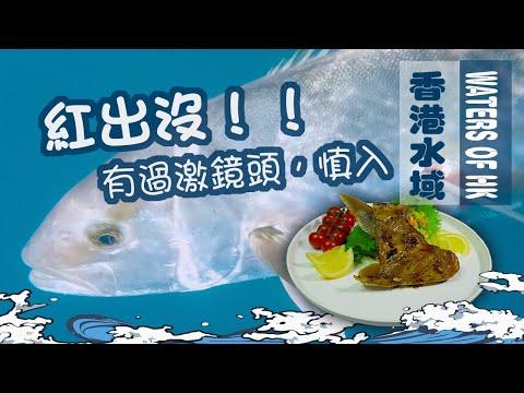 【漁人推介】香港水域  阿火帶你游入大海 香港藍水像外潛? 決戰巨型鱆紅 紅甘 教大家煮日式慢煮鱆紅魚鮫 食譜 Catch and Cook recipe KANPACHI Seafood