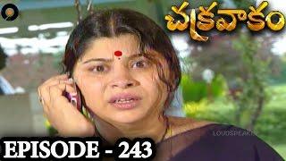 Episode 243  | Chakravakam Telugu Daily Serial