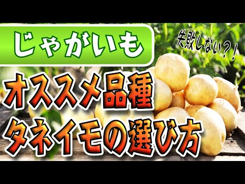 , title : '#2.ジャガイモの育て方【種イモの品種と選び方】購入後の管理方法まで説明します!【初心者も失敗しないポイント】