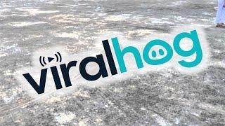 Смотреть онлайн Собака возит свои задние лапы