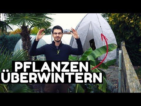 So überwinter ich meine Pflanzen im Bio Green Tropical Island XL