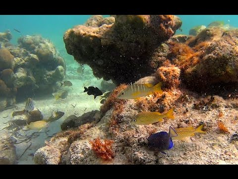 Tulum Mexico 2016 – Snorkeling and Cenotes