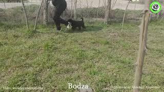 2021 03 20 Bodza…