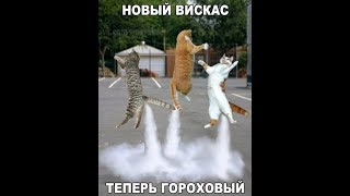 Funny СмеШные ЖивОтные до Слёз.  TRY NOT TO LAUGH CHALLENGE