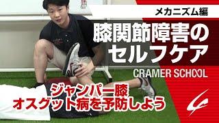 膝関節障害のセルフケア1 メカニズム編