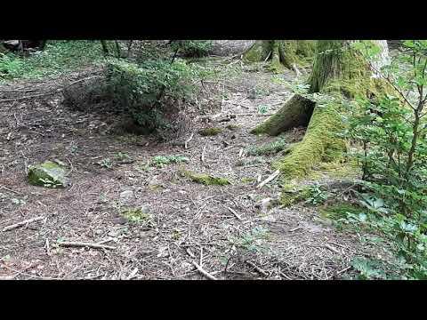 Trattamento dellunghia coltivata Pskov