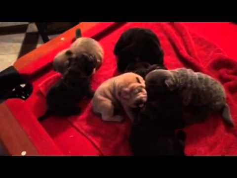 Puppies almost get week 3
